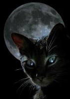 Etoile de Nuit