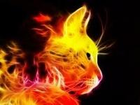 Pluie de Flamme