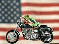 Présentation des motos 8-1