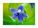 bloom909