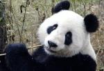 Ultimate Panda Cake