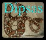 Dipsas
