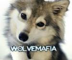 Wolvemafia