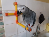 Forum Bird And You sur les Becs crochus 112-44