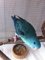 Recherche oiseaux, vente Matériels 131-91