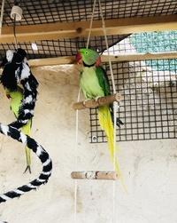Recherche oiseaux, vente Matériels 523-39