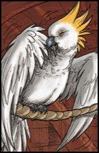 Recherche oiseaux, vente Matériels 599-87