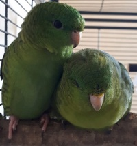 Forum Bird And You sur les Becs crochus 638-78