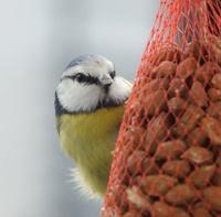 Forum Bird And You sur les Becs crochus 686-12