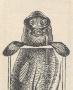 Klaatou