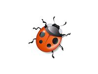 bug19
