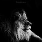Lionofdarkside