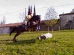 Horse-Lilou