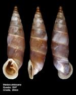 Les Clausiliidae Gray, 1855 620-42
