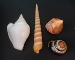 greg-shells29