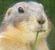 ♥♥♥ Photos et vidéos de Vanille et Chocolat,écureuils Japonais à ventre blanc... et de leurs frères et soeurs poilus ! ♥♥♥ - Page 2 821703