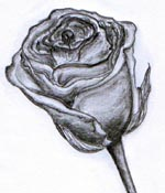 RosaFlorentis