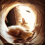 Angel Chicken Wing