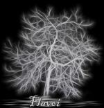 Flavoi