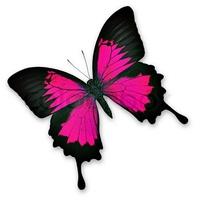 Schmetterlingstod
