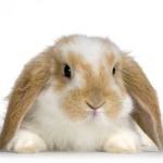 Sunny-Bunny