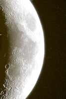 Staff Nueva Moon