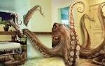 L'Octopus.