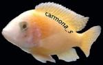carmona_s