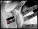 فتاة فلسطين