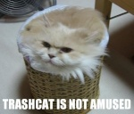 Trash Can Cat