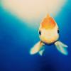 GoreFish