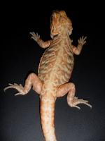 reptiles-snake