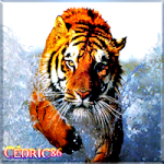 Céd86140