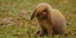 Mad.Bunny
