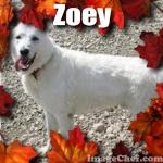 Zoey<3