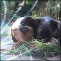Animal_Lover