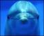 golfiño