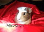 Miss-Chon'