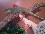 reptilesjuancho