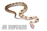 js-reptiles