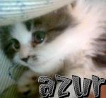 AzurLouli