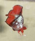 silverrabbit