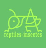 Reptiles-Insectes