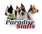 Paradise Staffs