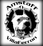 Villaferron Amstaff