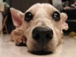 sniffydog