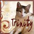Trinity39