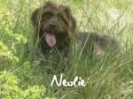 Neolie