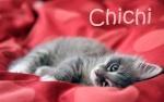 chichi92