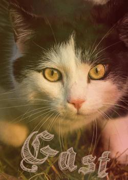 Straßenkatzen Gast_a10